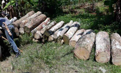 Dalam rencana pengembangan lahan produktif, PT Bogorindo menggandeng eden farm dalam rencana penanaman pohon cabai sebagai gantinya karet